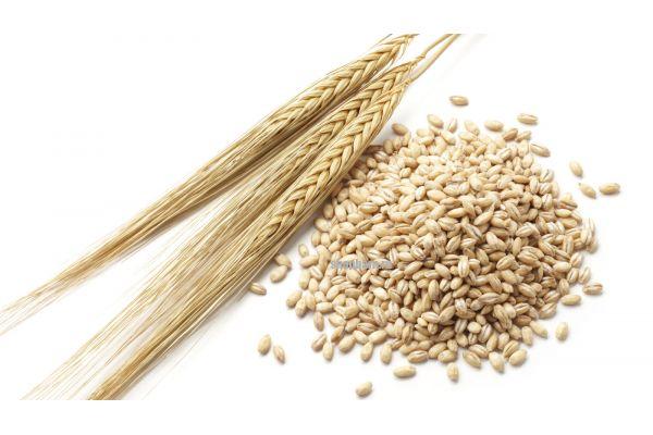 Пшеница несоложеная, отборная